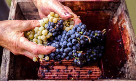Come si fa il vino